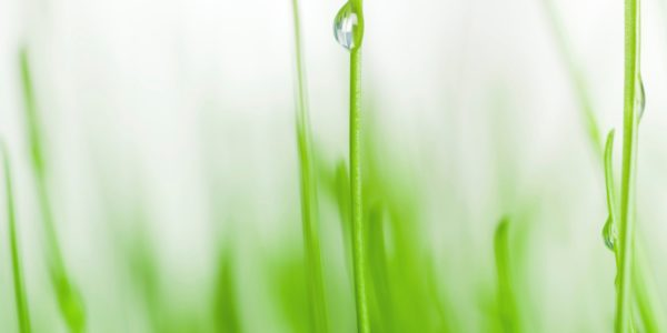 Water droplet on blade of grass