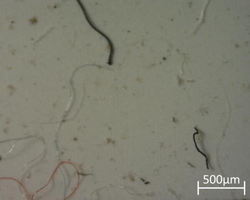 fotomicrografía de microplásticos